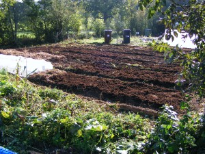 field scale raised beds for drainage with an annual application of compost/fertilizer