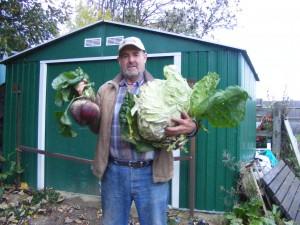 3.2Kg Cabbage